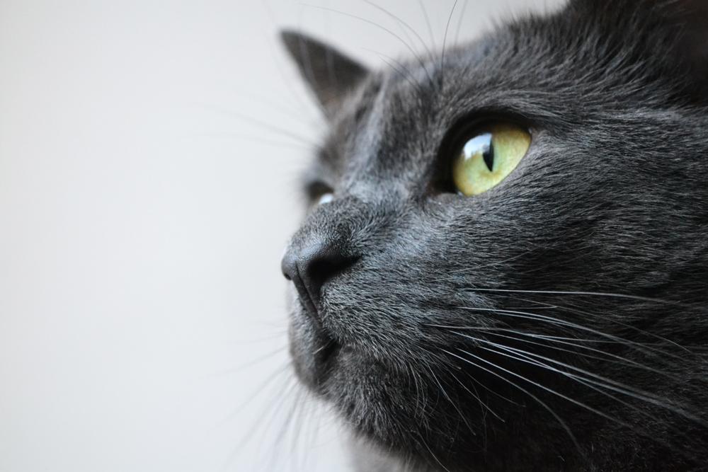 Adulting_cat